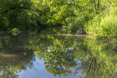 Reflective River In The Woods Stock Images