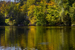 Reflective Still Pond in Autumn Stock Image