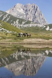 The reflects of the horses Stock Photography