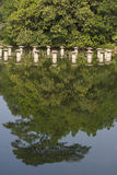 Reflejado Foto de archivo