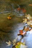 Reflejo de la hoja del otoño Imagen de archivo