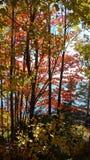 Reflejo del océano entre las hojas de la caída Imagen de archivo libre de regalías