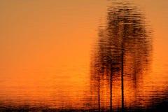 refleksje nad jeziorem drzewo Obrazy Royalty Free