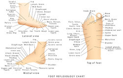 Refleksologii mapa Zdjęcia Stock