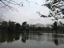 reflektera för Shadow†för ‹för Shade†‹and†för Tree†‹för Park†för sjön för ‹för environment†för ‹för lagoon†för vatt royaltyfria foton