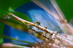 Reflektera i vattensmå droppar på stamensna av blommor royaltyfria foton