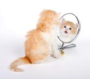 reflekterad kattunge Royaltyfria Bilder