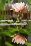 reflekterad serenity royaltyfri bild