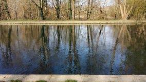 Reflekterade träd i en flod royaltyfri fotografi