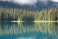 reflekterade trees Arkivfoton