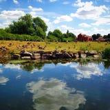 Reflekterande flodbank Royaltyfria Bilder