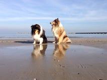 Reflekterande hundkapplöpning på stranden Royaltyfri Foto
