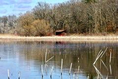 Reflekterande sjö, marsklan med gräs, vasser och träd i bakgrund Blå himmel med över huvudet moln Arkivbild