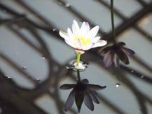 Reflekterande skönhet Royaltyfri Foto