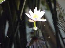 reflekterande skönhet Royaltyfria Bilder