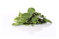 reflekterande spenatyttersida för nya leaves Royaltyfri Fotografi