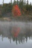 reflekterande tree Fotografering för Bildbyråer