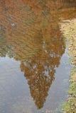 reflekterande trees Fotografering för Bildbyråer