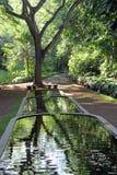 Reflekterat i vatten i Allerton den nationella tropiska botaniska trädgården, Kauai Arkivbild