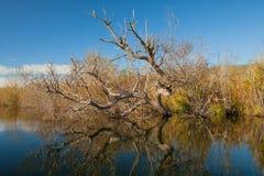 reflekterat vatten Arkivfoto