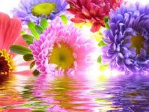 reflekterat vatten för asters grupp Arkivbild