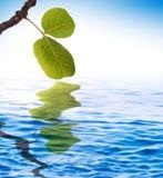reflekterat vatten för green leaves royaltyfri fotografi