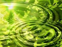 reflekterat vattenträ Arkivfoto