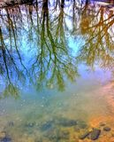 Reflektierende Ansichtflüsse und -bäume lizenzfreie stockfotos