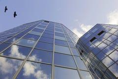 Reflektierende Fassade und Krähen Lizenzfreies Stockfoto