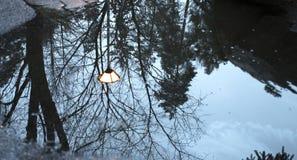 Reflektierende Winter-Bäume, Hintergrund Lizenzfreie Stockbilder