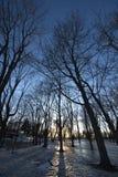 Reflektierende Winterschatten des gefrorenen Parks bei Sonnenuntergang lizenzfreies stockbild