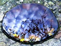 reflektierender Herbst des Pools Stockfotos