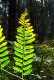 Reflektierendes Sonnenlicht des hellgrünen Farns im Wald lizenzfreies stockfoto