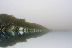 Reflektierte Baumzeile Stockfoto