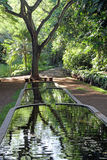 Refletido na água no jardim botânico tropical nacional de Allerton, Kauai Fotografia de Stock