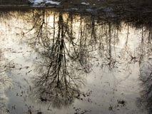 reflexão Imagem de Stock Royalty Free
