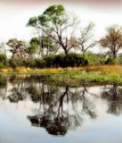 Reflexão africana da água do delta Imagem de Stock Royalty Free