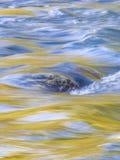 Reflexão amarela da água imagens de stock