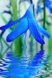 Reflexão azul da flor na água fotografia de stock royalty free