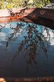 Reflexão azul de uma planta foto de stock royalty free