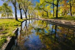 Reflexão bonita das árvores em uma poça em um parque da cidade no amanhecer mim fotos de stock royalty free