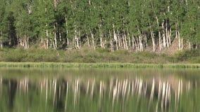 Reflexão cênico do lago mountain video estoque