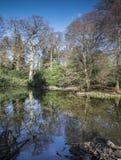 Reflexão calma das árvores no lago no dia de inverno claro Fotos de Stock Royalty Free