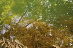 Reflexão da água imagens de stock royalty free