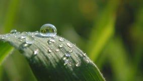 Reflexão da água Imagens de Stock