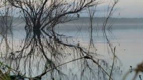 Reflexão da água & da escova Imagens de Stock