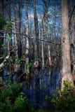 Reflexão da água das árvores Fotos de Stock Royalty Free