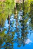 Reflexão da água das árvores Imagens de Stock