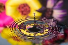 Reflexão da água de flores coloridas Fotografia de Stock