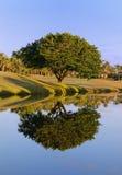 Reflexão da árvore Imagem de Stock
